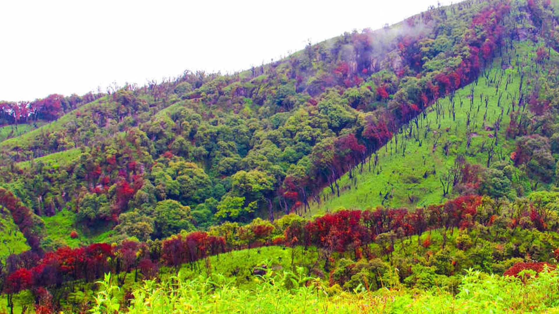 Dzuko-Valley,-Kohima,-Nagaland
