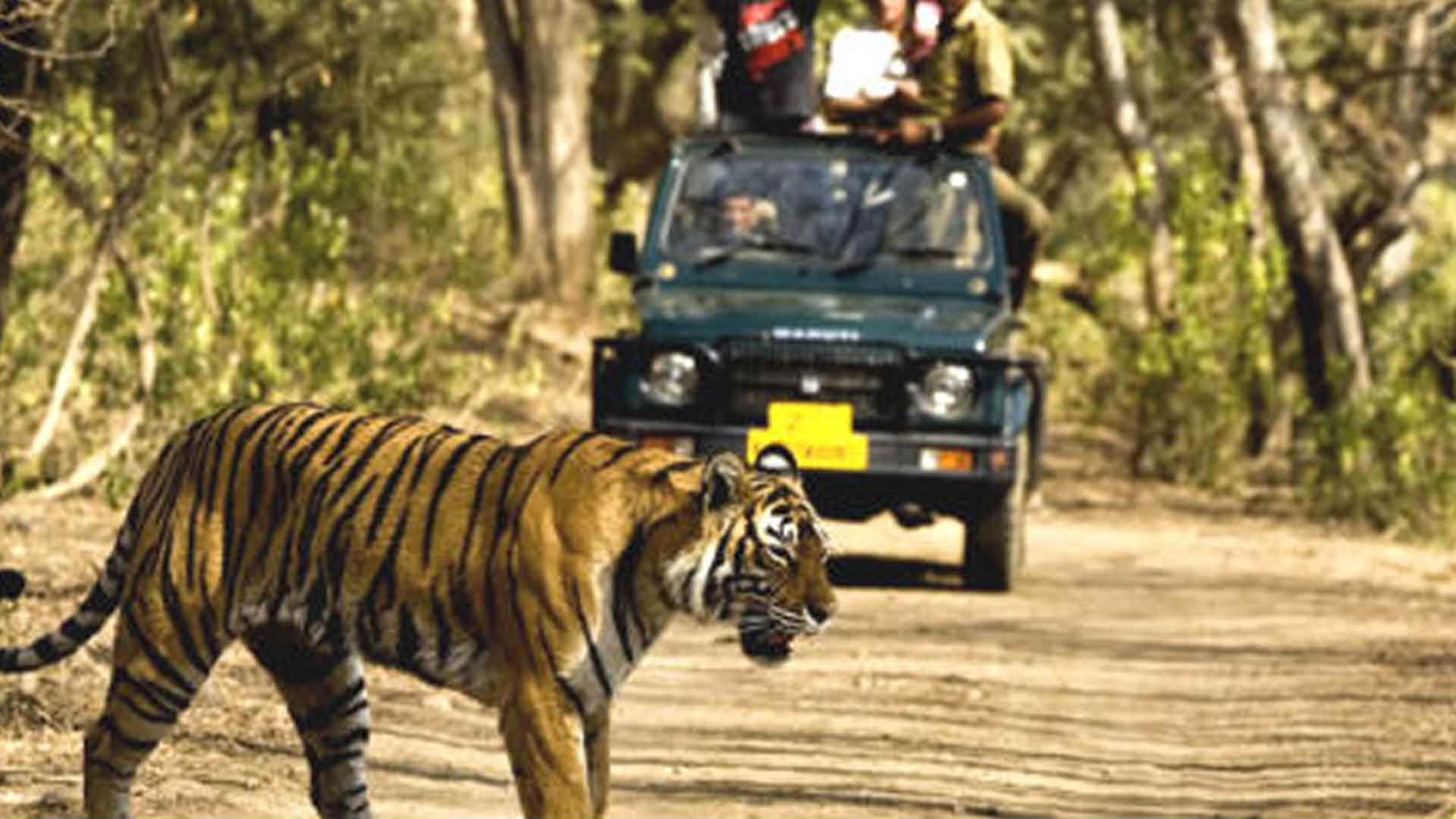 Jim-Corbett-National-Park---A-Hidden-Treasure-of-Nature